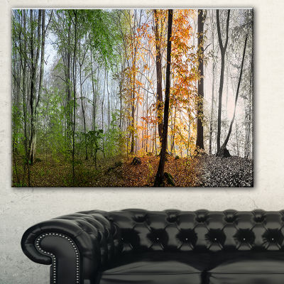 Designart Morning Forest Panorama Landscape Photography Canvas Print - 3 Panels