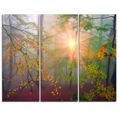 Designart Morning In Misty Green Forest LandscapePhoto Canvas Art Print - 3 Panels