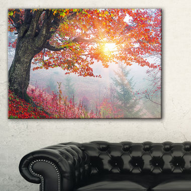 Designart Morning In Misty Red Forest Landscape Photo Canvas Art Print