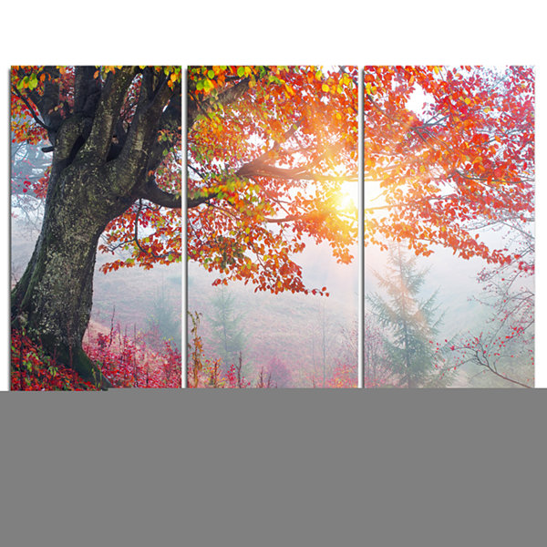 Designart Morning In Misty Red Forest Landscape Photo Canvas Art Print - 3 Panels