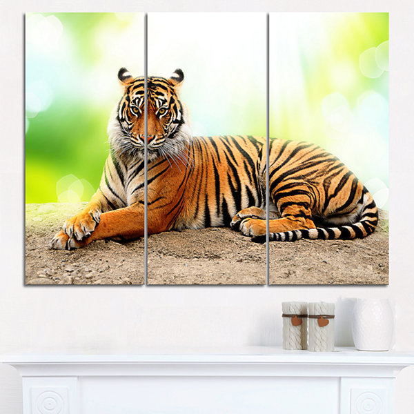 Design Art Relaxing Tiger Animal Photo Canvas Art-3 Panels