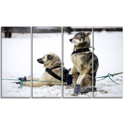 Large Sled Dogs Relaxing Oversized Animal Wall Art- 4 Panels