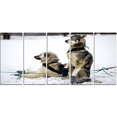 Designart Large Sled Dogs Relaxing Oversized Animal Wall Art- 5 Panels