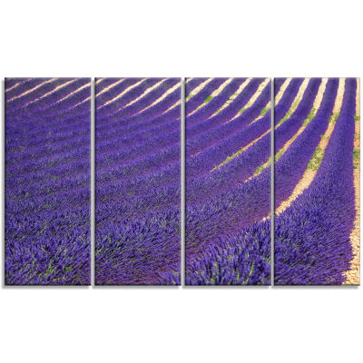 Lavender Blooming Fields As Texture Oversized Landscape Wall Art Print - 4 Panels