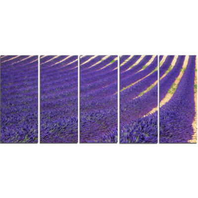 Lavender Blooming Fields As Texture Oversized Landscape Wall Art Print - 5 Panels