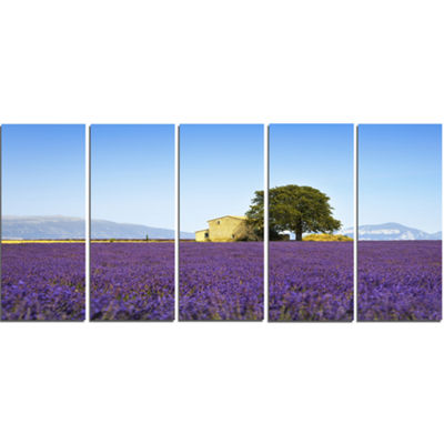 Designart Lavender Flowers Blooming Field Oversized Landscape Wall Art Print - 5 Panels