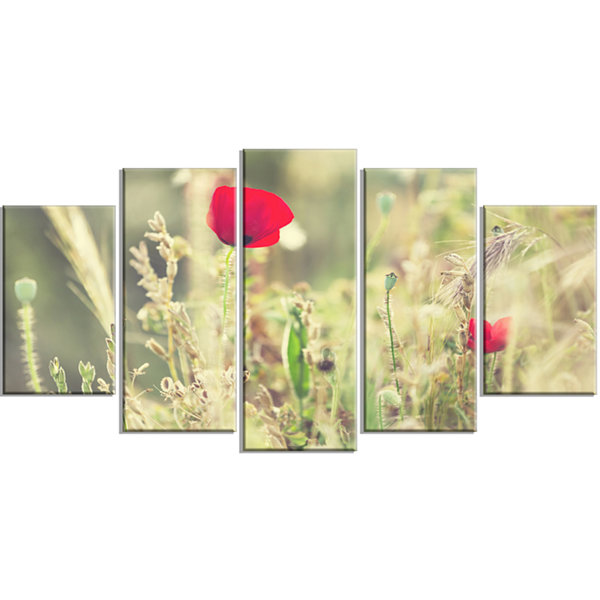 Designart Meadow With Wild Poppy Flowers Large Flower Wrapped Canvas Art Print - 5 Panels