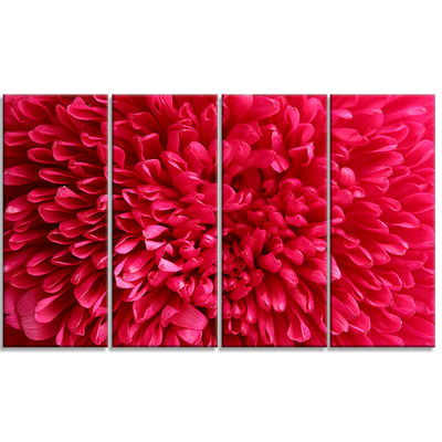 Designart Pink Aster Flower Petals Close Up LargeFloral Canvas Artwork - 4 Panels