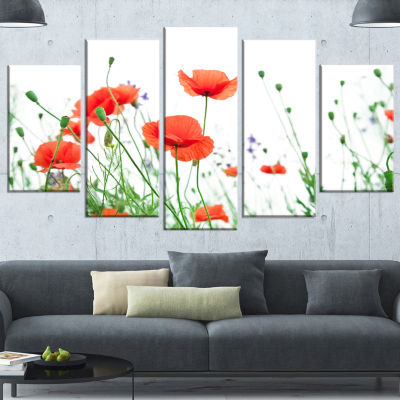 Poppy Flowers on White Background Floral Wrapped Canvas Art Print - 5 Panels