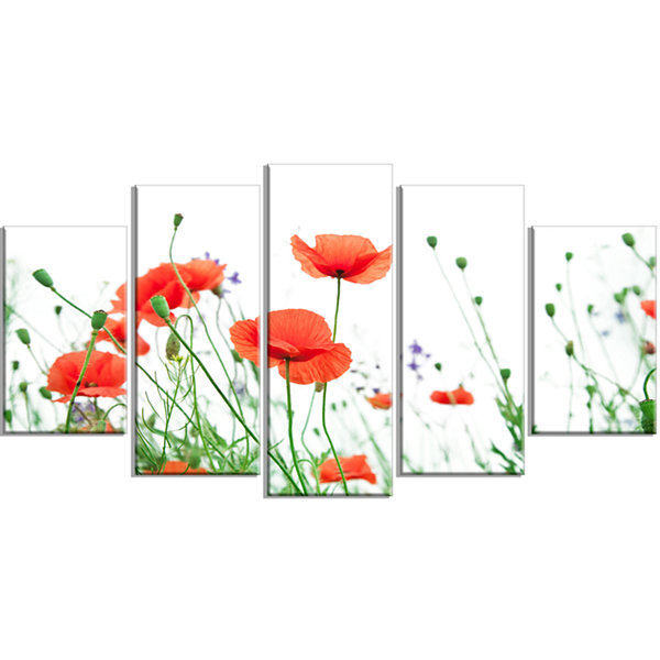 Designart Poppy Flowers on White Background FloralWrapped Canvas Art Print - 5 Panels
