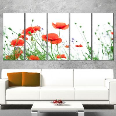 Designart Poppy Flowers on White Background FloralCanvas Art Print - 5 Panels