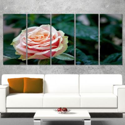 Designart Red and Orange Rose Flower Close Up Floral WrappedCanvas Art Print - 5 Panels