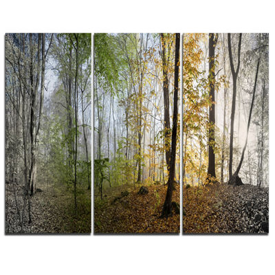 Designart Morning Forest Panoramic View LandscapePhotography Canvas Print - 3 Panels