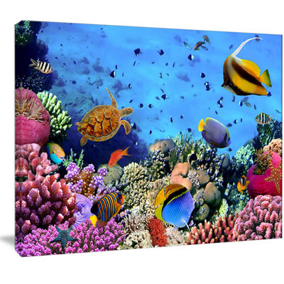 Designart Coral Colony On Reef Egypt Animal Wall Art