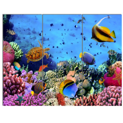 Designart Coral Colony On Reef Egypt Animal Wall Art - 3 Panels