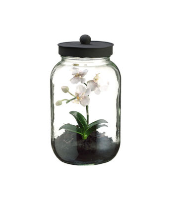 "11.25"" Artificial Mini White & Pink Phalaenopsis Orchid Silk Flower in Glass Terrarium Jar with Lid"""