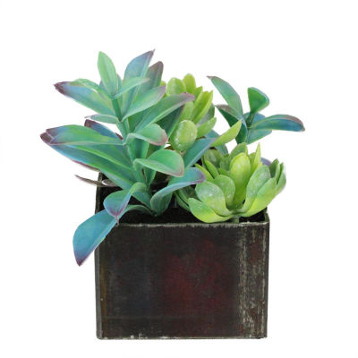 "7"" Artificial Succulents Arrangement in Distressed Square Pot"""