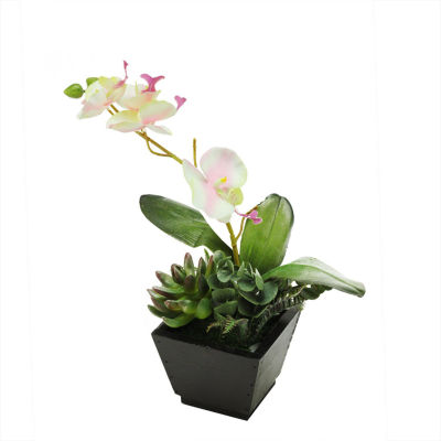 "13"" Artificial White  Pink and Green Orchid with Succulent Plants in a Decorative Square Black Pot"""