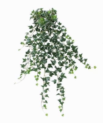 """31.50"""" Decorative Green and White Ivy Spring Floral Hanging Bush"""""""