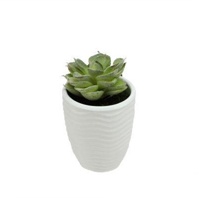 "4.5"" Decorative Light Green Echeveria Succulent Plant in White Pot"""