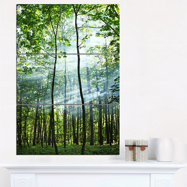 Designart Green Sunny Forest Landscape Photography Canvas Art Print - 3 Panels