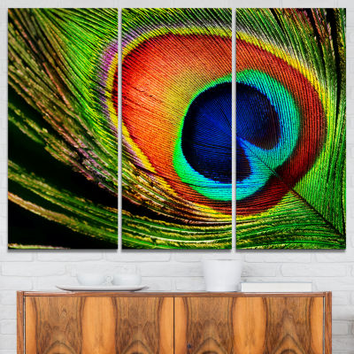 Designart Peacock Feather Photography Canvas Art Print - 3 Panels