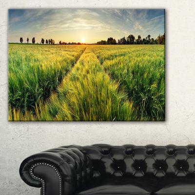 Designart Green Wheat Field At Sunset Landscape Photography Canvas Print