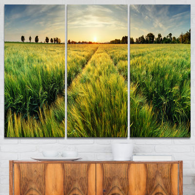 Designart Green Wheat Field At Sunset Landscape Photography Canvas Print - 3 Panels