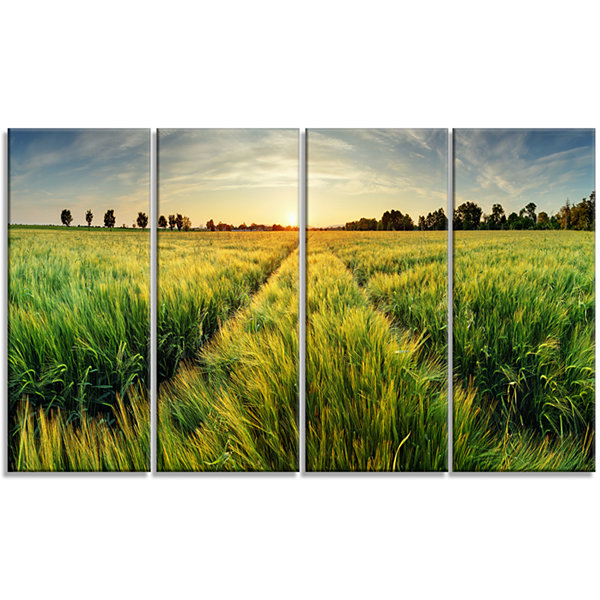 Designart Green Wheat Field At Sunset Landscape Photography Canvas Print - 4 Panels