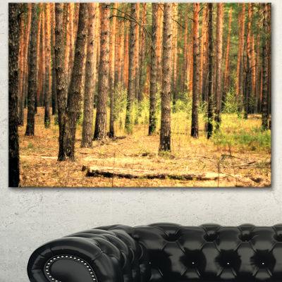 Design Art Beautiful Pine Forest At Sunset ModernForest Canvas Art