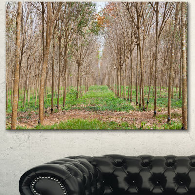 Designart Beautiful Rubber Plantation Photo ModernForest Canvas Art