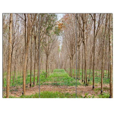 Designart Beautiful Rubber Plantation Photo ModernForest Canvas Art 3 Panels
