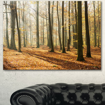 Designart Bright Autumn Day In Thick Forest ModernForest Canvas Art