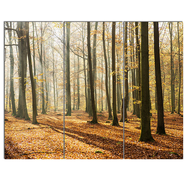Designart Bright Autumn Day In Thick Forest ModernForest Canvas Art 3 Panels