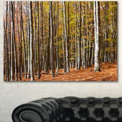 Designart Bright Day In Thick Forest Modern ForestCanvas Art