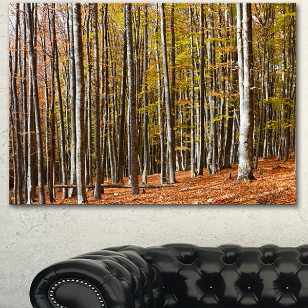 Designart Bright Day In Thick Forest Modern ForestCanvas Art