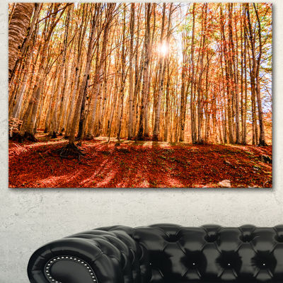 Designart Bright Sun Over Thick Fall Forest ModernForest Canvas Art