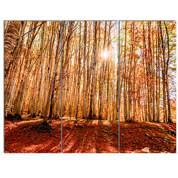 Designart Bright Sun Over Thick Fall Forest ModernForest Canvas Art 3 Panels