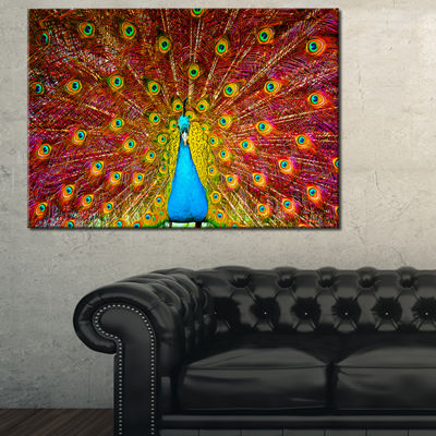 Designart Peacock Dancing Animal Photography Art