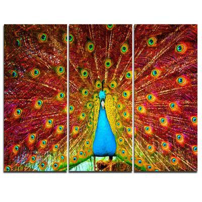 Design Art Peacock Dancing Animal Photography Art-3 Panels