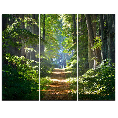 Designart Bright Green Forest In Morning LandscapePhotography Canvas Print - 3 Panels