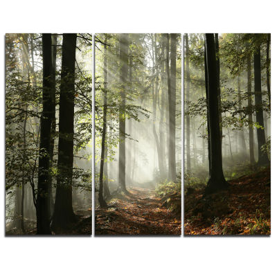Design Art Light In Dense Fall Forest With Fog Landscape Art Print Canvas - 3 Panels