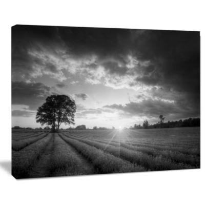 Design Art Vibrant Black White Lavender Field Landscape Canvas Art
