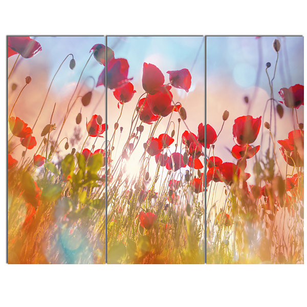 Design Art Cute Poppy Flowers In Sunlight Canvas Art Print - 3 Panels