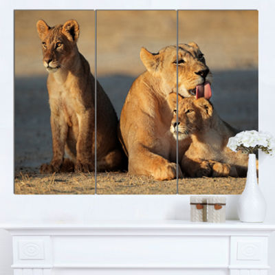 Designart Lioness With Cubs Taking Relax AfricanCanvas Art Print - 3 Panels