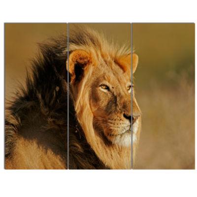 Designart Male African Lion Canvas Art Print - 3 Panels