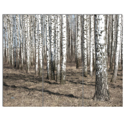 Designart Beautiful Dense Birch Forest View ModernForest Canvas Art - 3 Panels