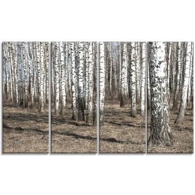 Designart Beautiful Dense Birch Forest View ModernForest Canvas Art - 4 Panels