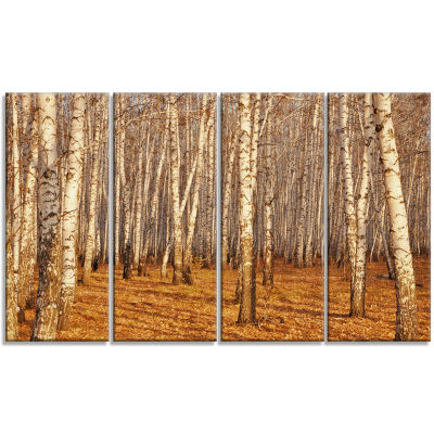 Designart Dense Birch Forest In The Fall Forest Canvas Art Print - 4 Panels