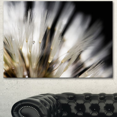 Designart Dandelion Close Up With Dewdrops FlowersCanvas Wall Artwork